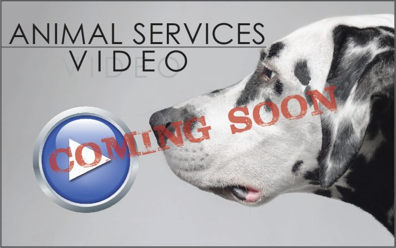 Animal Video CS